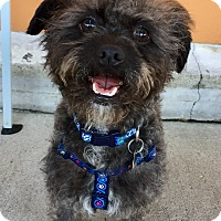 Adopt A Pet :: Ricky - Santa Ana, CA