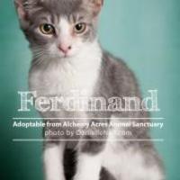 Adopt A Pet :: Ferdinand - Salem, OH