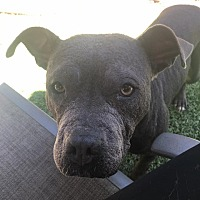 Adopt A Pet :: Dani - Lincoln, CA
