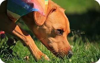 Terrier (Unknown Type, Medium) Mix Dog for adoption in SYDNEY, Nova Scotia - Chi Chi