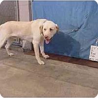 Adopt A Pet :: Yogi - Rescued - Zanesville, OH