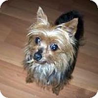 Adopt A Pet :: Rory - Dartmouth, MA