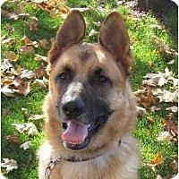 Adopt A Pet :: Anton - BC Wide, BC
