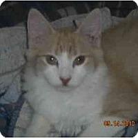 Adopt A Pet :: Christian - Riverside, RI