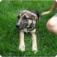 Adopt A Pet :: Emily - In CT! - Adamsville, TN