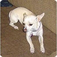 Adopt A Pet :: Lucy - Pembroke Pines, FL