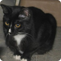 Adopt A Pet :: Scarlett - Coos Bay, OR
