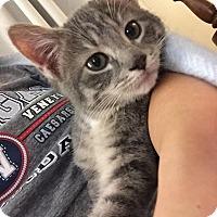 Adopt A Pet :: Jingles - Chicago, IL