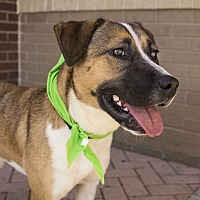 Shepherd (Unknown Type) Mix Dog for adoption in Charlotte, North Carolina - Twyla