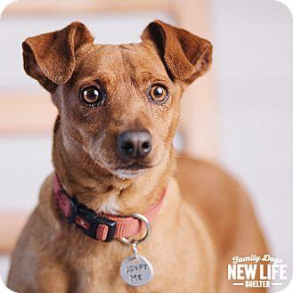 Dachshund/Miniature Pinscher Mix Dog for adoption in Portland, Oregon - Julio