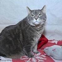 Adopt A Pet :: Piper - Neenah, WI