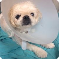 Adopt A Pet :: Kermit - Oak Ridge, NJ