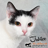 Adopt A Pet :: Jubilee - Broadway, NJ