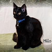 Adopt A Pet :: Milo - Weeki Wachee, FL
