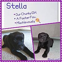 Adopt A Pet :: Stella - Oviedo, FL