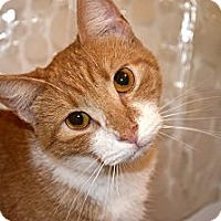 Adopt A Pet :: James - Xenia, OH