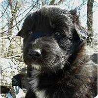 Adopt A Pet :: Otis - Rigaud, QC