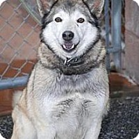 Adopt A Pet :: Shasta - Minneapolis, MN