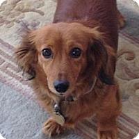Adopt A Pet :: Natalia - Killingworth, CT