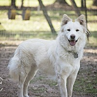 Adopt A Pet :: Sadie - Sugar Land, TX