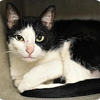 Adopt A Pet :: BOSCO - Palmyra, NJ