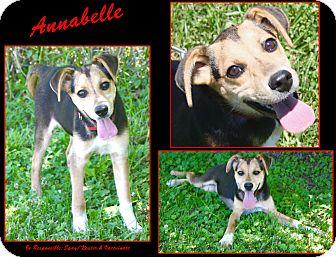 Shepherd (Unknown Type)/Mixed Breed (Medium) Mix Puppy for adoption in Cuba, Missouri - Annabelle