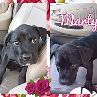 Adopt A Pet :: Marty - Corinth, NY
