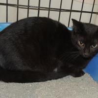 Adopt A Pet :: Blinky - Westville, IN