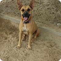 Adopt A Pet :: Oriana - San Diego, CA