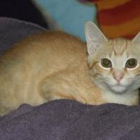 Adopt A Pet :: Stormy - Greensboro, GA