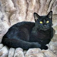 Adopt A Pet :: Truffle - Mississauga, Ontario, ON