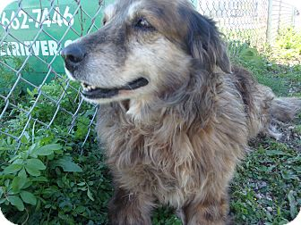 Australian Shepherd Mix Dog for adoption in Kirby, Texas - Marla
