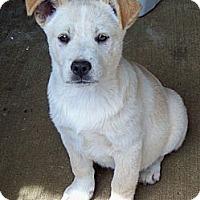 Adopt A Pet :: MACK - Glastonbury, CT