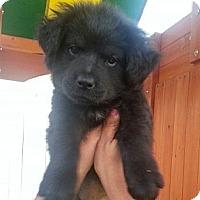Adopt A Pet :: LEO - Inglewood, CA