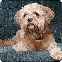 Adopt A Pet :: Lilo - Mays Landing, NJ