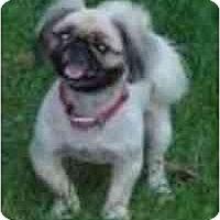 Adopt A Pet :: Wheezer-NC - Mays Landing, NJ