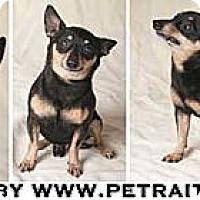 Adopt A Pet :: Mack - Chicago, IL