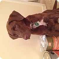 Adopt A Pet :: Keisha - Lewisville, IN