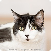 Adopt A Pet :: Isabelle - Fountain Hills, AZ