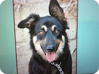 German Shepherd Dog Mix Puppy for adoption in Los Angeles, California - BISCUIT VON BUNDEN