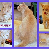 Adopt A Pet :: Mish Mish - Berkeley Springs, WV
