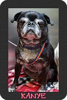 Pug Dog for adoption in Austin, Texas - Kanye