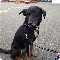 Adopt A Pet :: Greta - Brick, NJ