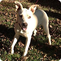 Adopt A Pet :: Lulu - Naugatuck, CT