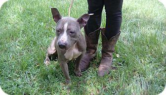 Bulldog Mix Dog for adoption in Blountstown, Florida - Kiera