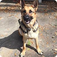 Adopt A Pet :: Lady 1 - Baton Rouge, LA