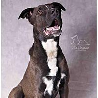 Adopt A Pet :: BANDIT - Salt Lake City, UT