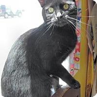 Adopt A Pet :: Katie - Waupaca, WI