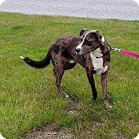 Adopt A Pet :: Innes - MA - Warren, ME
