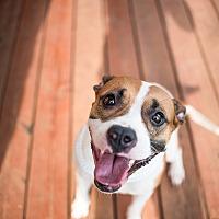 Adopt A Pet :: Roxxy - Fort Valley, GA